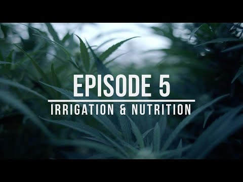 Growing Hemp: Best Practices for Success – Episode 5: Irrigation & Nutrition