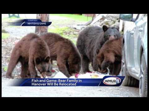Wildlife officers to trap, relocate family of bears in Hanover