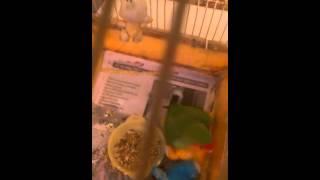 Порно попугай выебал слона