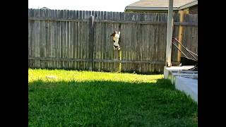 My dog can do this