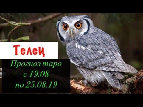 Телец гороскоп на неделю с 19.08 по 25.08.19 _ Таро прогноз