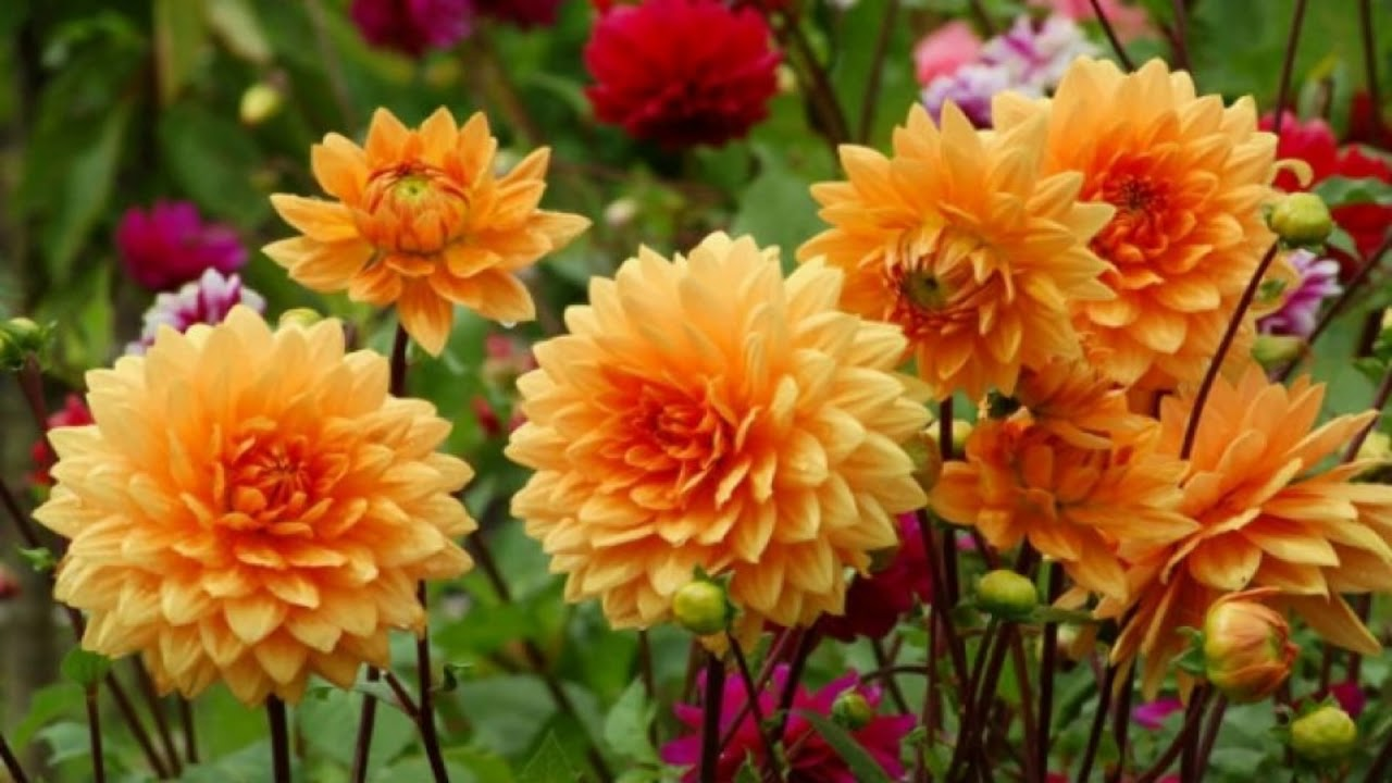 Fresh beautiful fall flowers hd1080p youtube fresh beautiful fall flowers hd1080p izmirmasajfo