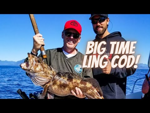 Monster Ling Cod - And Coho Too! (Tofino, BC)