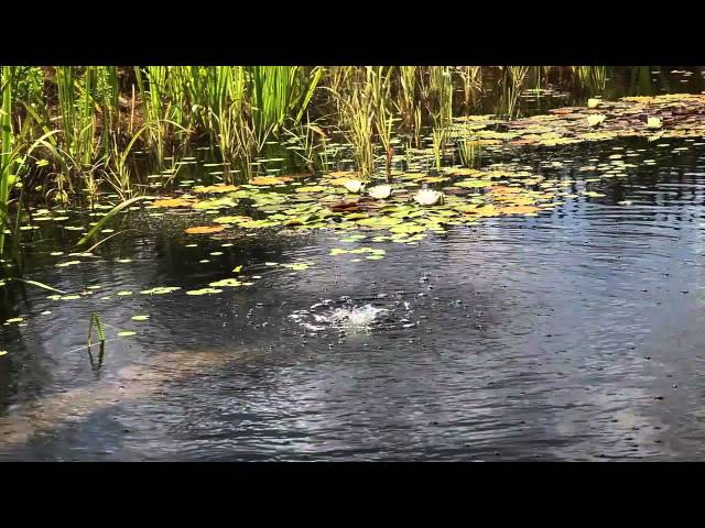 How To Build A Diy Natural Swimming Pool Video Treehugger