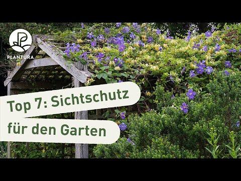 Immergrune Kletterpflanzen Die Top 7 Plantura