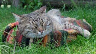 Как сделать лежанку для кота из старого свитера