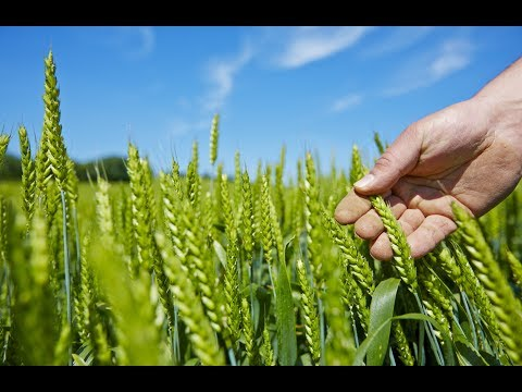 Know how aWhere provides weather information to boost agriculture productivity