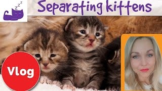 Separating kittens from a cat mother 😿 how to deal with cat separation anxiety(Relax My Cat are experts in creating relaxing music to help calm your cat and help them sleep. Our music is composed in-house by our team of producers, and ..., 2016-06-29T18:00:02.000Z)