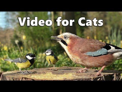 Videos for Cats to Watch  – Forest Birds – Vögel – Oiseaux – Vogels – Fåglar – Aves