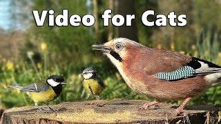 Videos for Cats to Watch  - Forest Birds - Vögel - Oiseaux - Vogels - Fåglar - Aves