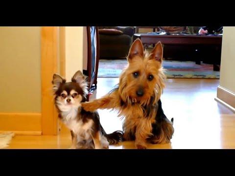 Видео про собак -