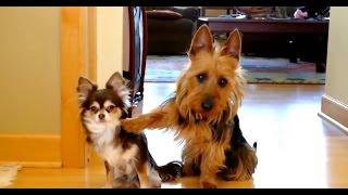 ТОП 5 лучшие видео смешная собака. TOP 5 best videos funny dog.