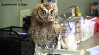 Cool Screech Owl Noise - Exotic Pet Vet