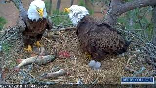 Berry College Eagles - Nice fish Dad!! - 02-16-18