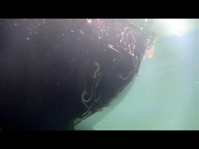 Seaweed 10/01/18