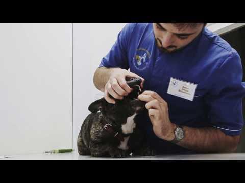 Как правильно давать таблетки собаке видео