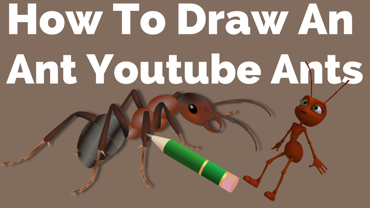 How To Draw An Ant Youtube Ants How To Draw An Ant Youtube Ants Fir Kids