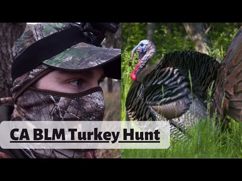 Turkey Hunting California BLM Land