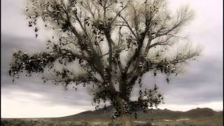 """The Shoe Tree"" Feat. Scarecrow1719"