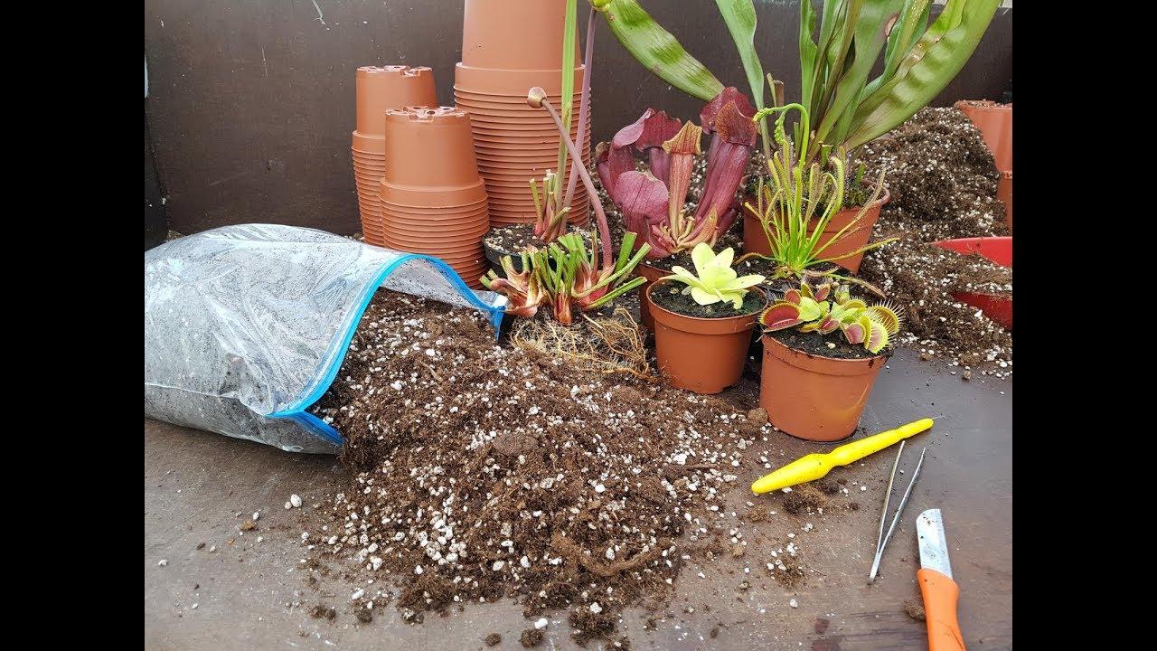 4 die richtige karnivoren erde f r bestes pflanzenwachstum fleischfressende pflanzen green