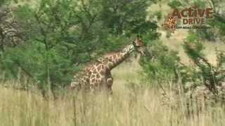 Zuidelijk Afrika Expedities