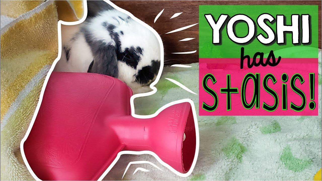 Rabbit Health   Symptoms and Treatments   Ohio Holland Lops