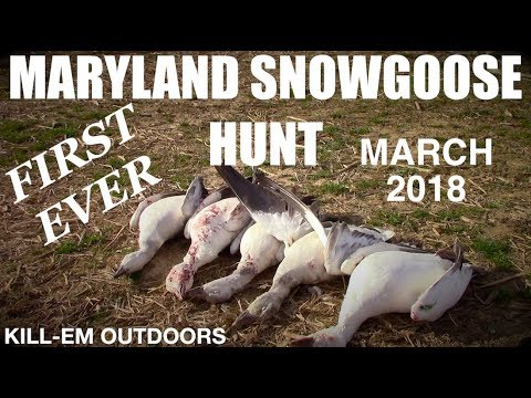 Maryland Snow Goose Hunt (FIRST EVER)