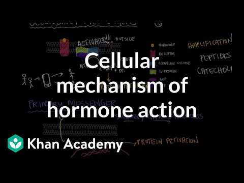 Cellular mechanism of hormone action | Endocrine system physiology | NCLEX-RN | Khan Academy
