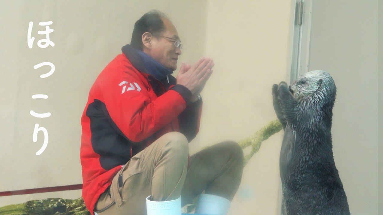 """ラッコの可愛さと飼育員さんの笑顔にほっこり!【ラッコのメイちゃんとキラちゃん5】!Sea Otterr""""May and Kira"""" Toba Aquarium鳥羽水族館 2021.4"""