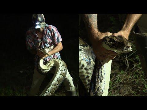 Hunter Bravely Wrestles 16-Foot Burmese Python