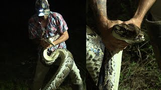 Hunter Bravely Wrestles 16-Foot Burmese Python
