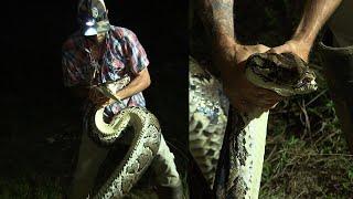 Download Hunter Bravely Wrestles 16-Foot Burmese Python Mp3 and Videos