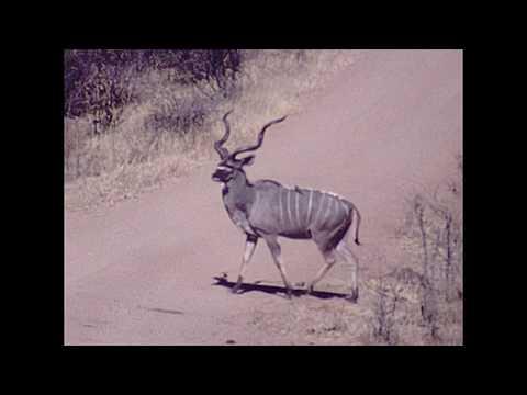 1980 African Animals in Hwange National Park - Reel #50