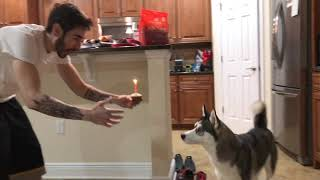 I Surprised My Dog For Her Birthday