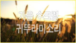 가을풍경 느낌 - 수크령 -해질무렵풍경 -귀뚜라미소리- 자연의소리 -nature sounds