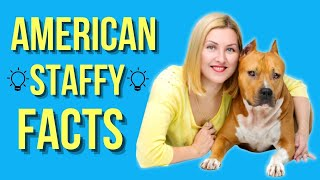 American Staffordshire Terrier Top 10 Facts ( Amstaff )