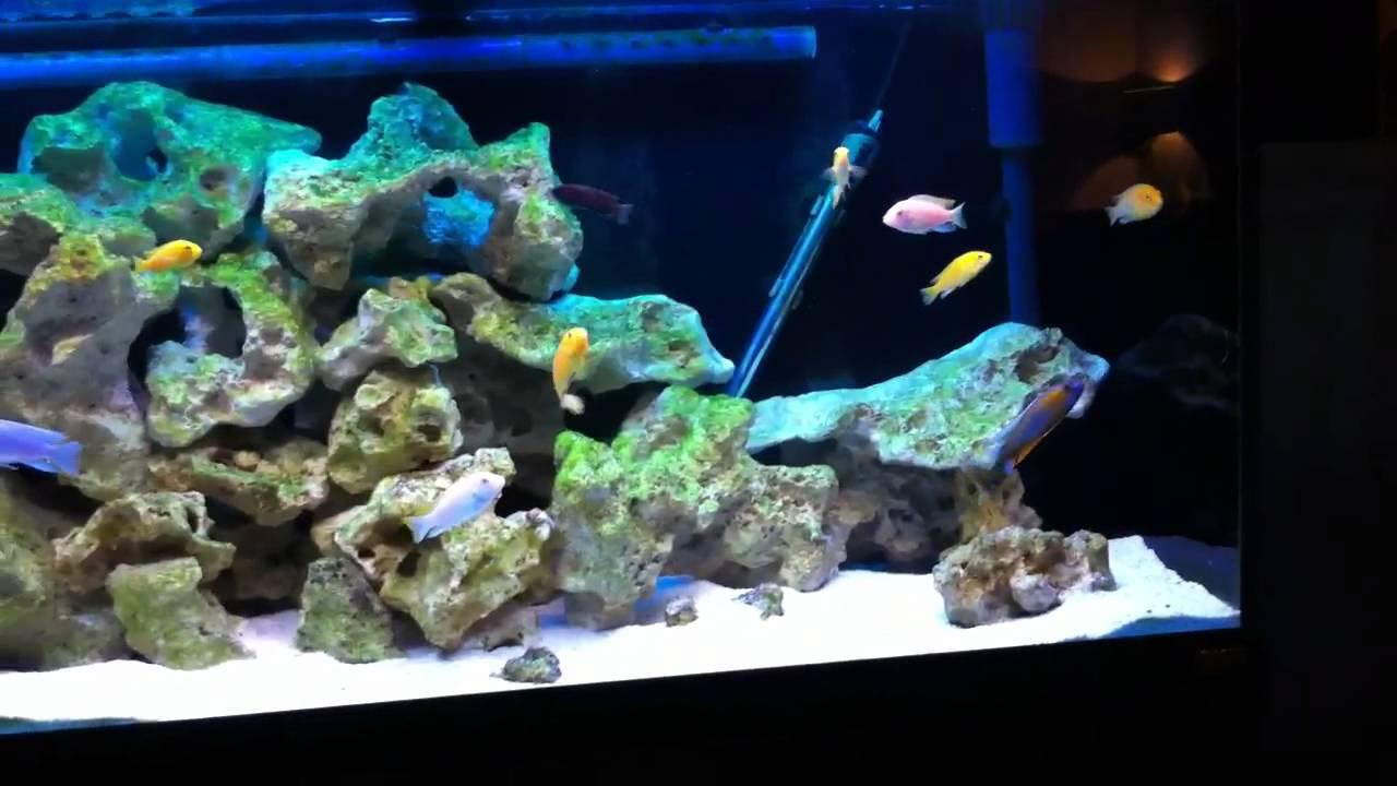 Roma Aquarium
