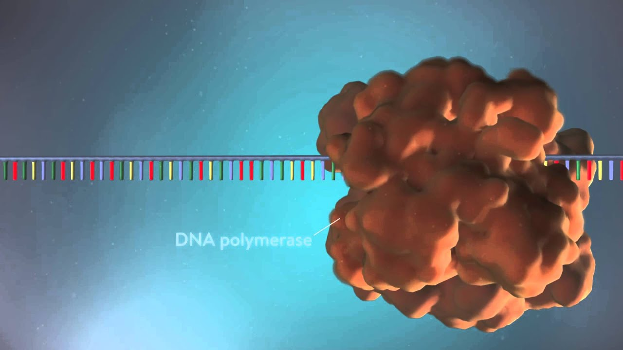 DNA replication - 3D