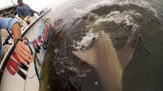 SHARKS!!!  SHARKS!!!  Venice, LA  2013 Faux Pas Rodeo