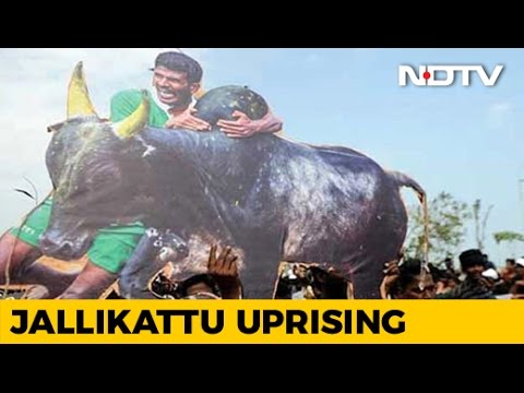 Order Allowing Jallikattu Moves Up The Ranks To The President