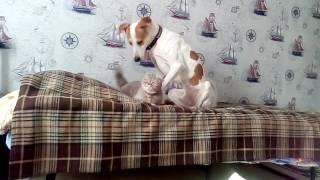 Когда кошка любит собаку а собака любит кошку