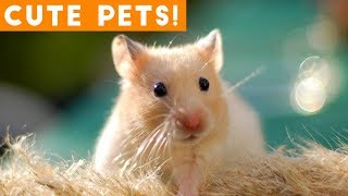 Cutest Pets of the Week Compilation May 2018 | Funny Pet Videos