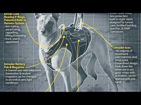 The Dog That Cornered Osama Bin Laden ... not your standard K9...nor is the gear they wear...