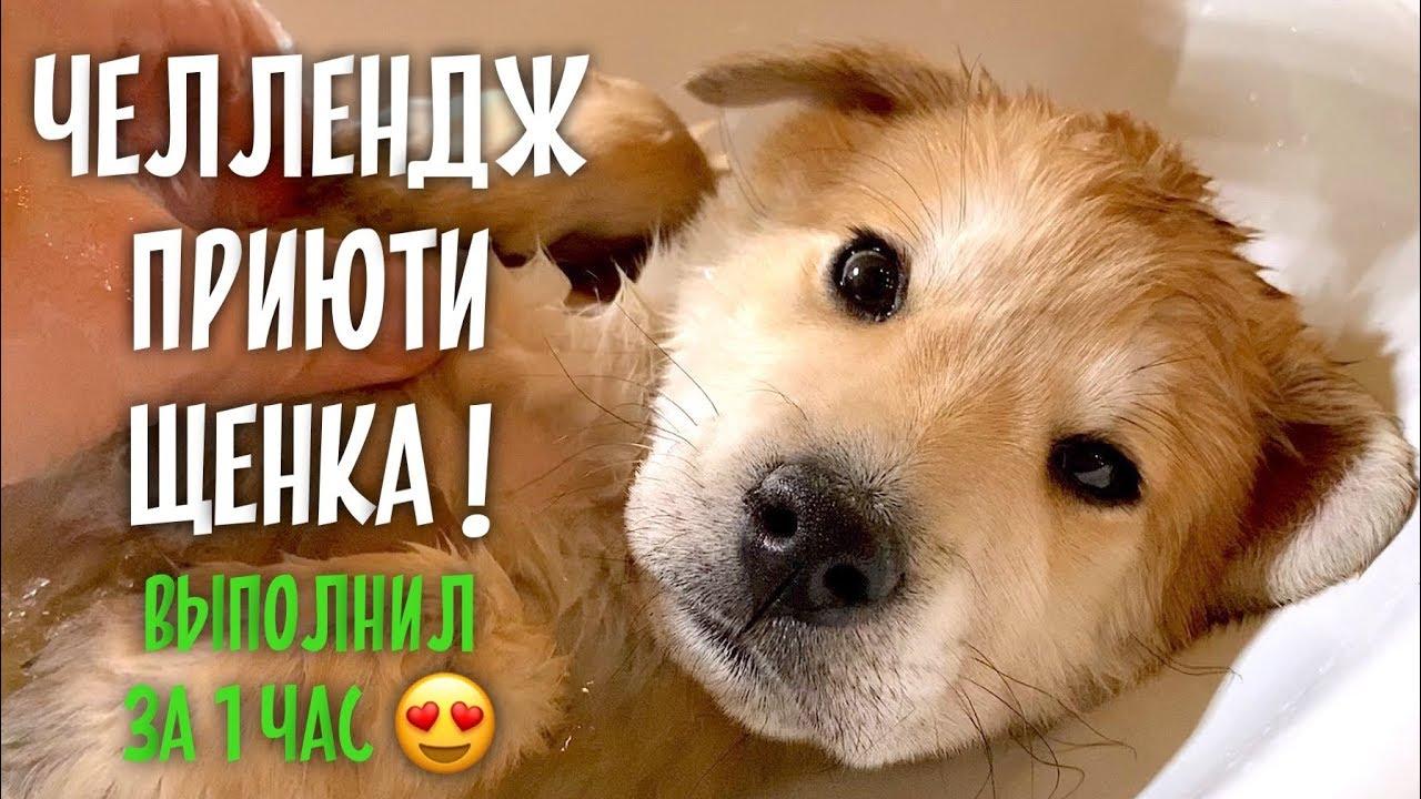 Взял щенка, нашел семью ❤️. Летит в Москву.