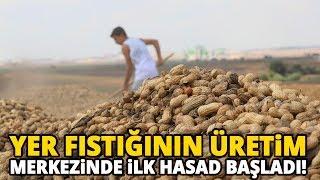 Türkiye'nin Yer Fıstığı İhtiyacının Yüzde 60'ı Adana'dan
