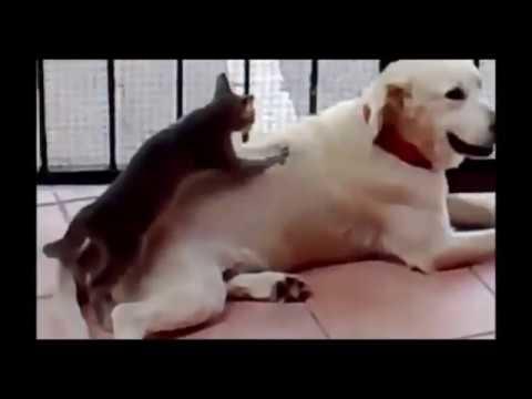 amazing funny animal - amazing movies best funny animals