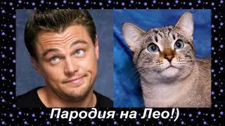Cats that look like celebrities Кошки похожие на знаменитостей   Смешные кошки