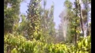 Italian Gun -skipper In Action In Coffee Irrigation.3gp