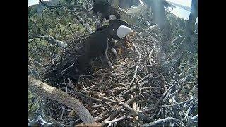 Eagle videos, Eagle clips - Clip.FAIL