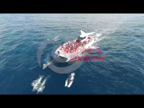 Dolphin watching & Beach BBQ boat trip/tour by AlgarExperience (Albufeira, Algarve, Portugal)
